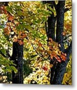 Dazzling Days Of Autumn Metal Print