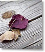 Dead Leaves Metal Print