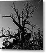 Dead Tree II Metal Print
