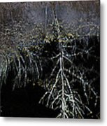Dead Tree Reflects In Black Water Metal Print