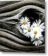 Dead Wood And Asters Metal Print