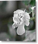 Death Of A Flower Metal Print