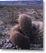 Death Valley Cactus Metal Print