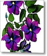Deciduous Climber (clematis Warsaw Nike) Metal Print by Archie Young