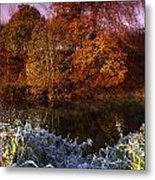 Deciduous Woods, In Autumn With Frost Metal Print by The Irish Image Collection