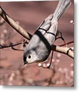Decked Out - Tufted Titmouse Metal Print