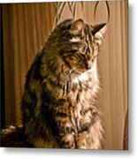 Deep In Kitty Thought Metal Print