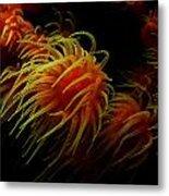 Deep Ocean Coral Polyp Metal Print