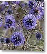 Deep Purple 04 Metal Print