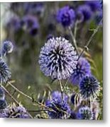 Deep Purple 05 Metal Print