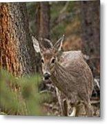 Deer 1660 Metal Print