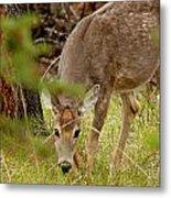 Deer 1661 Metal Print