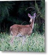 Deer - Doe - I Heard Something Metal Print