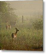 Deer In Foggy Field Metal Print