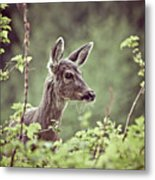 Deer In Forest Metal Print