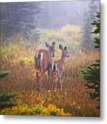 Deer In The Fog In Paradise Park In Mt Metal Print