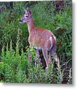 Deer In The Marsh Metal Print