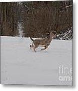Deer Run Metal Print