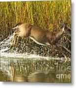 Deer Running Through The Salt Marsh Metal Print