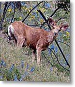 Deer Standing In Wildflowers Metal Print