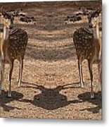 Deer Symmetry  Metal Print
