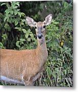 Deer Watch Metal Print