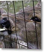 Deer Will Work For Crackers Metal Print