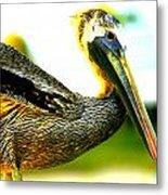 Deerfield Pelican Metal Print