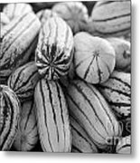 Delicata Winter Squash In Black Metal Print