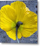 Delicate And Strong Metal Print