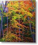 Delicate Colors Metal Print by Vijay Sharon Govender