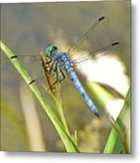 Delicate Dragonfly Metal Print
