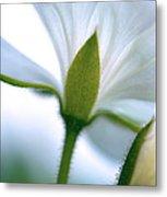 Delicate Petals Metal Print
