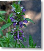 Delicate Purple Flowers-2012 Metal Print