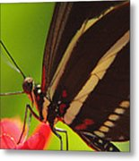 Delicate Touch.. Metal Print