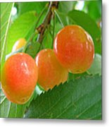 Delicious Plums On The Branch Metal Print