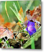Delight In Disorder Metal Print