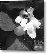 Delphinium From The Magic Fountains Hybrid Named Blue With White Bee Metal Print