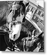 Denver Stock Show Metal Print