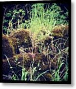 Derbyshire Hedgerow Metal Print