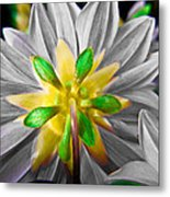Desaturated Dahlia Metal Print