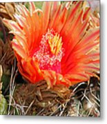 Desert Beauty Metal Print