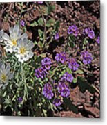 Desert Chicory And Heliotrope Metal Print