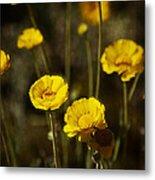 Desert Marigold Metal Print