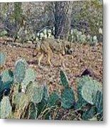 Desert Wolf Metal Print