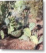Desert's Collection Of Dried Flowers 3 Metal Print