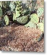 Desert's Collection Of Dried Flowers1 Metal Print