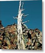 Desolation Wilderness Tree 2 Metal Print