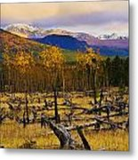 Destruction And Re-growth After Forest Metal Print