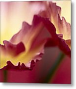 Detail Of Crimson Colored Rose Petals Metal Print